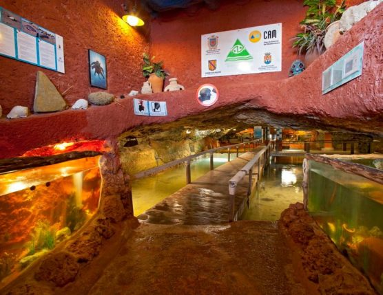 Ibiza with kids aquarium