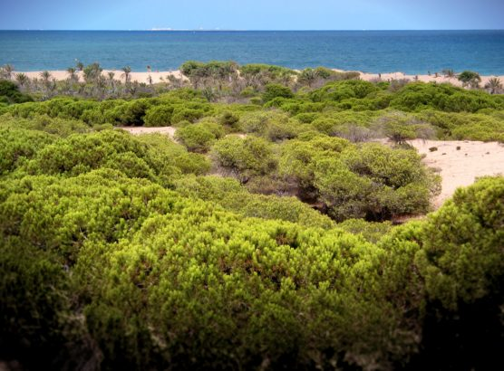 the best towns of the costa blanca guardamar