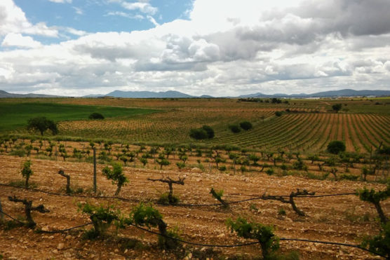 wine-routes-and-wine-tours-Valencian-community-wineyard-muchosol-e1538580855376