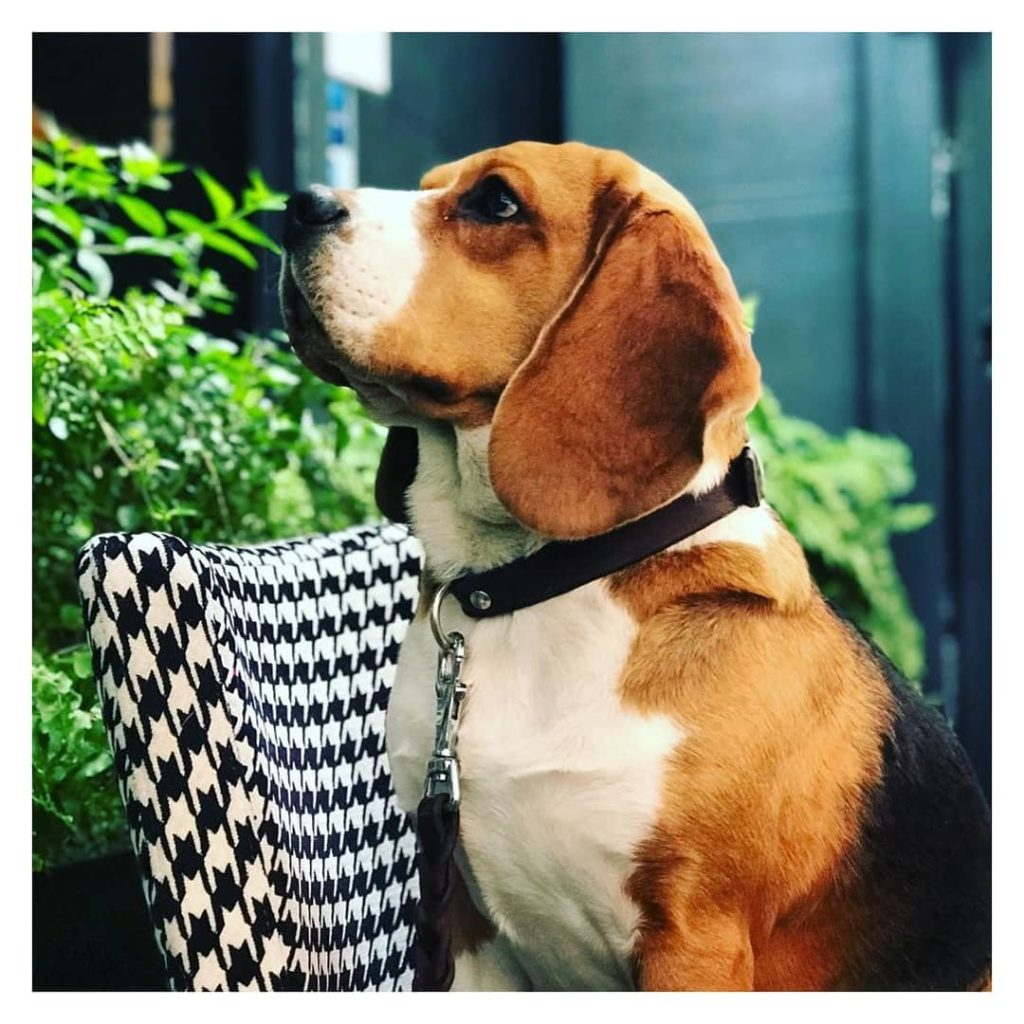 Restaurants-to-go-with-your-pet