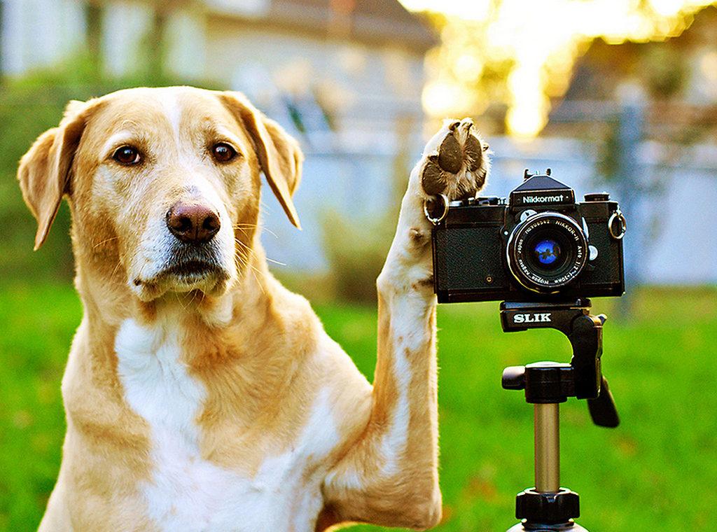photograph pets