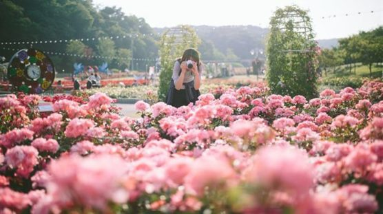 beautiful places with flowers